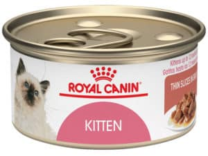 Bengal Kittens food